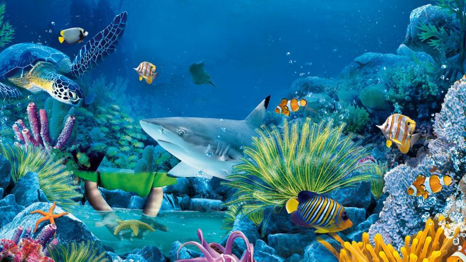 Sea Life Jesolo - Hotel Bolivar Jesolo